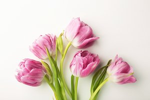 Pink tulips on white background.