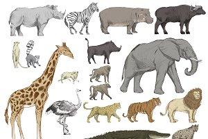 Illustration drawing style animals