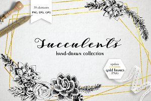 Succulents hand-drawn collection