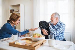 A senior couple with a pet dog
