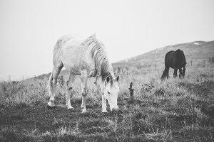 Horse Grazing the Grass