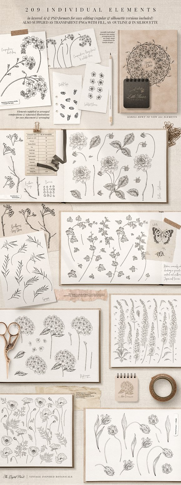Vintage Botanical Illustrations in Illustrations - product preview 3