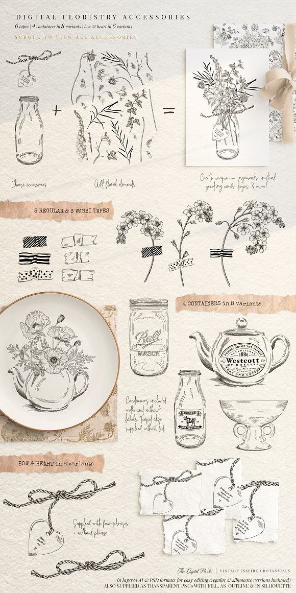 Vintage Botanical Illustrations in Illustrations - product preview 6