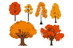 Yellow, orange and red forest trees