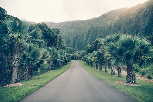 Asphalt tropical road with palm