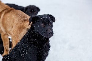 Stray dogs in the winter outside