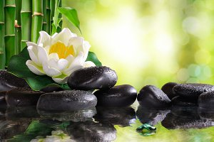 Water lily on many stones
