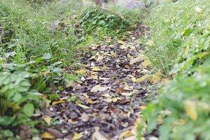 Fall leaves road