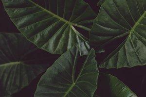 Dark Tropical Leaves Portrait