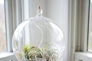 Air Plant Globe