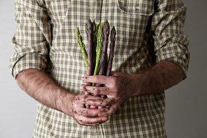 Man's dirty hands holding fresh aspa