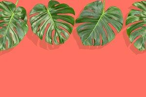 Floral border tropical Monstera leaf