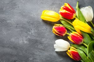 Red, yellow and white tulips on gray