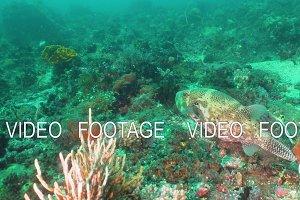 Coral reef and tropical fish. Bali