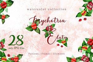 Psychotria elata Watercolor png