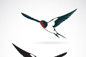 Vector of bird swallows design.