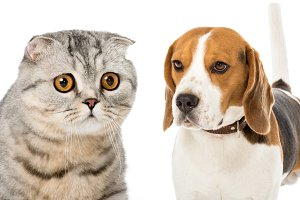 collage of cat and dog isolated on w