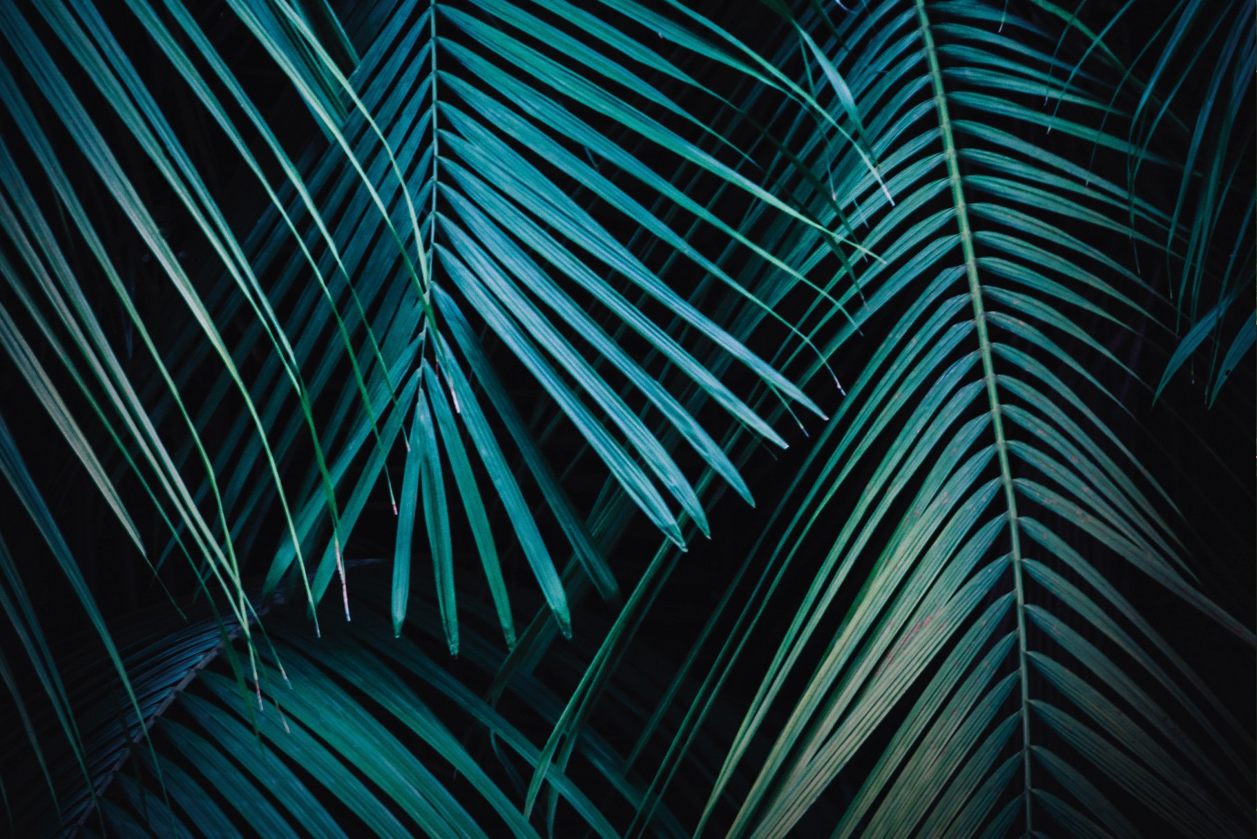 Tropical Palm Leaves Background Containing Jungle Tropical And Foliage High Quality Nature Stock Photos Creative Market Are you looking for tropical leaves background design images templates psd or png vectors files? tropical palm leaves background containing jungle tropical and foliage