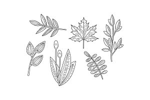Collection of hand drawn plants