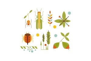Collection of insects and plants