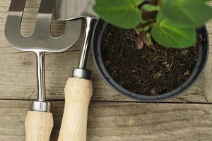 Gardening tools and a planting pot