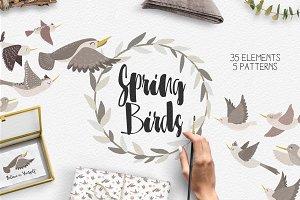 Spring birds set