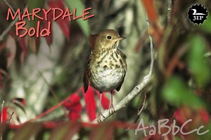 Marydale Bold