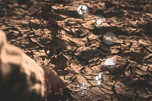 Drought in the nature