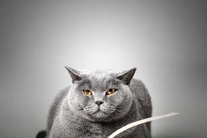 Funny cute cat reading book.