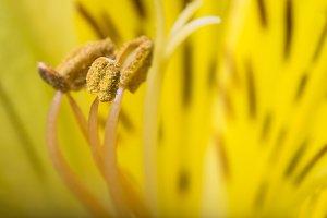 Macro shot yellow flower
