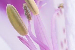 Macro shot flower