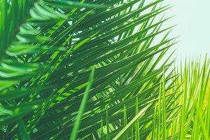 Enjoy a tropical dream