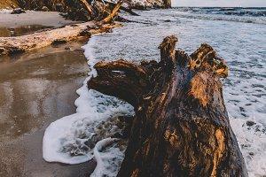 Fallen tree laying on a beach.