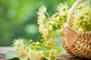 Wicker basket with lime flowers