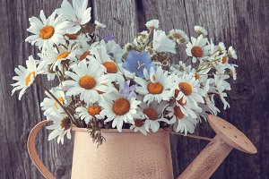 Watering can with daisies