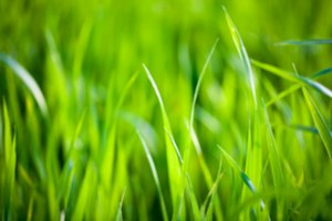 Blurred green grass