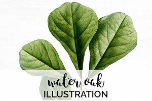 Water Oak Leaf Vintage Leaves