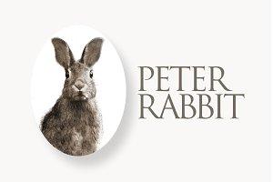 Peter Rabbit II