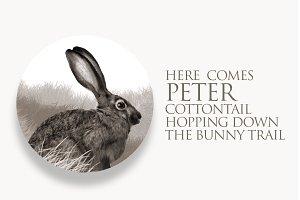 Peter Cottontail Rabbit Illustration