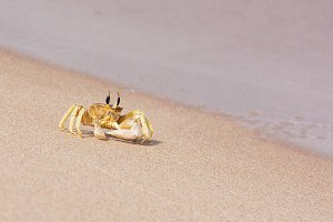 A single crab on the water's edge