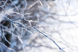 frost tree branch background