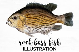 Bronzed Rock Bass Vintage Fish