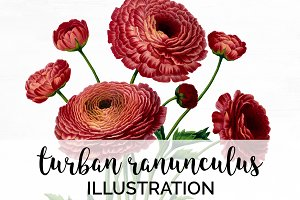 turban ranunculus vintage florals
