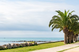 Palm trees on the beach in Peniscola