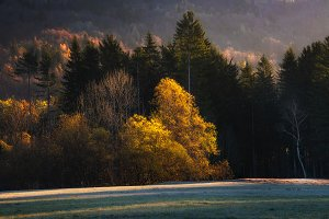 Trees in autumn forest