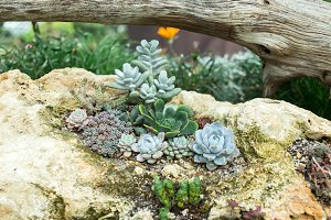 Succulents and cactus in a garden