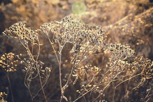 Dried autumn grass as background