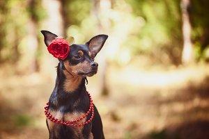 Beautiful dog, a puppy