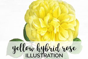 yellow hybrid rose vintage florals