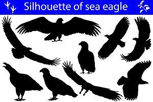 Silhouette of sea eagle